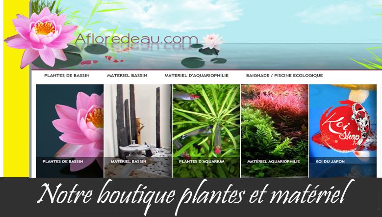 Notre boutique pour le matériel bassin et les plantes aquatiques