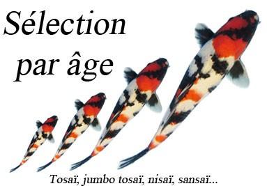Choisissez votre koï japon par âge
