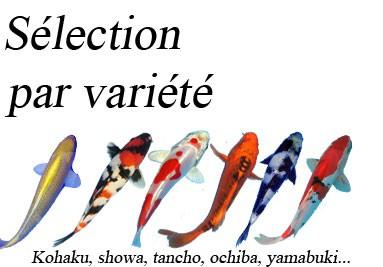 Sélection par variété